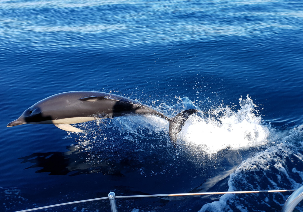 Jonian-Dolphin-Conservation-taranto